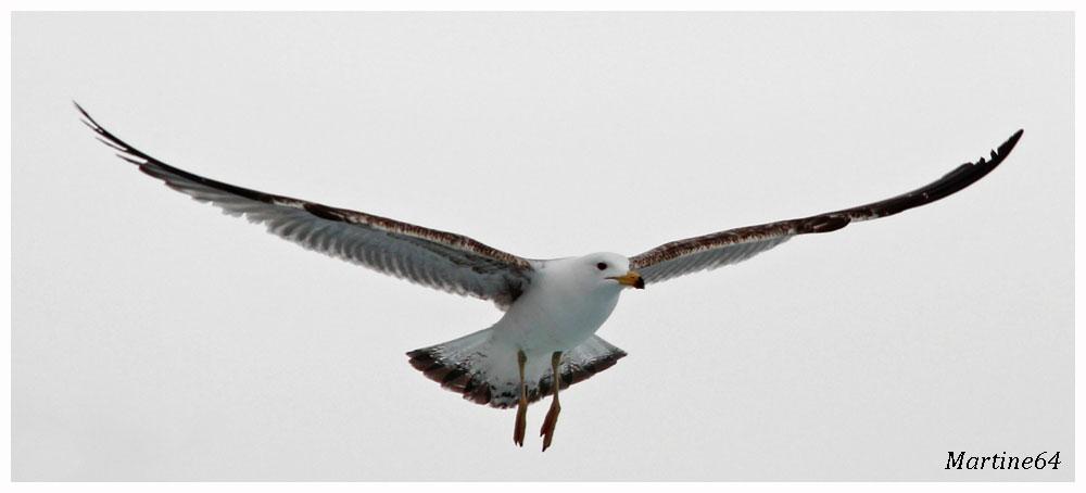 Oiseaux-02-4748.jpg