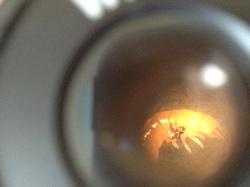 TP 6ème : observation de la microfaune du sol