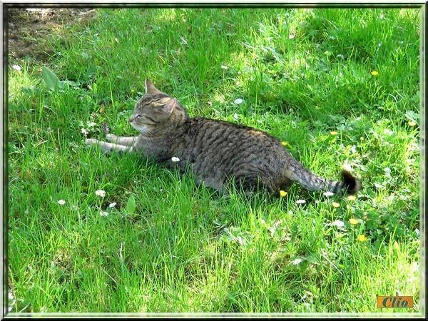 PETIT BONHOMME 4 MAI 2008 (2)