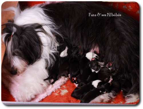 ♥ les bébés de Fara Fawcet ♥ *petite-fille d' Athos*
