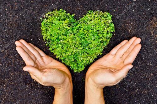 La Terre de plus en plus verte