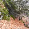Passage près d\'une petite grotte, tanière d\'ours peut-être