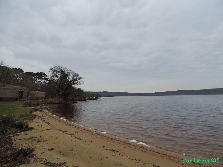 le lac Léon dans les Landes (40)