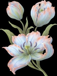 ♥ La tulipe ♥