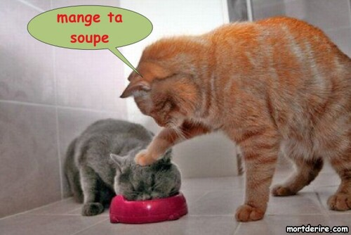 Humour 2:  10 photos de chats...
