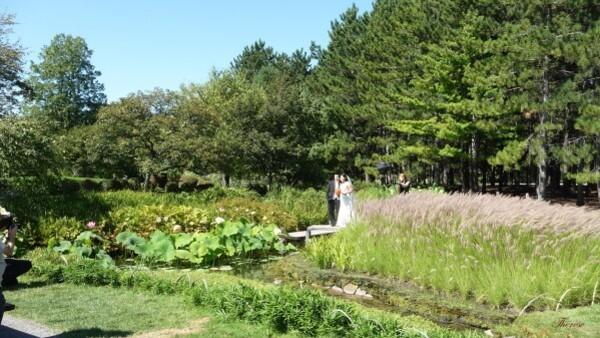 Jardin japonais (1)