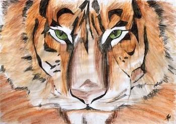 Tigre du Bengal 05 avril 2008