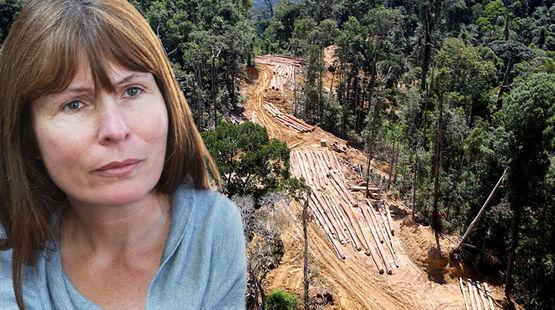 Photomontage : la rédactrice en chef du site Sarawak Report avec pour arrière plan une photo aérienne de déforestation