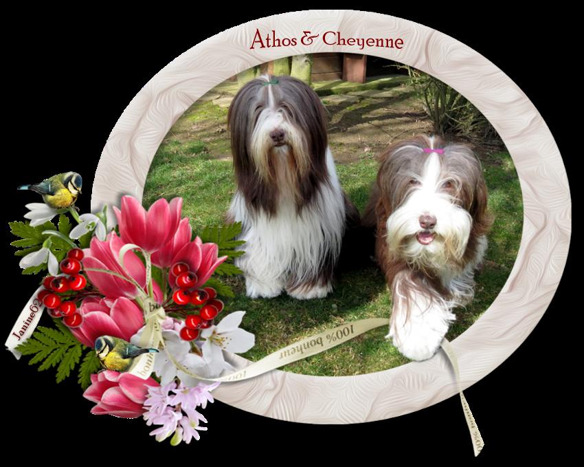 ♥ Belle fin de semaine  d' Athos & Cheyenne ♥