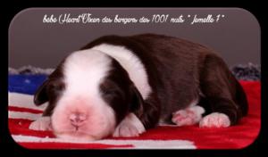 le 15 Juin 2017 - Naissance des 9 bébés d' Heart Vixen * fille d' Athos*
