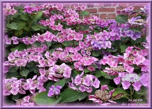 Fleurs bleues, mauves, violettes