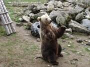 Polar Zoo-ours