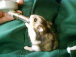 Alimentation eau hamster biberon