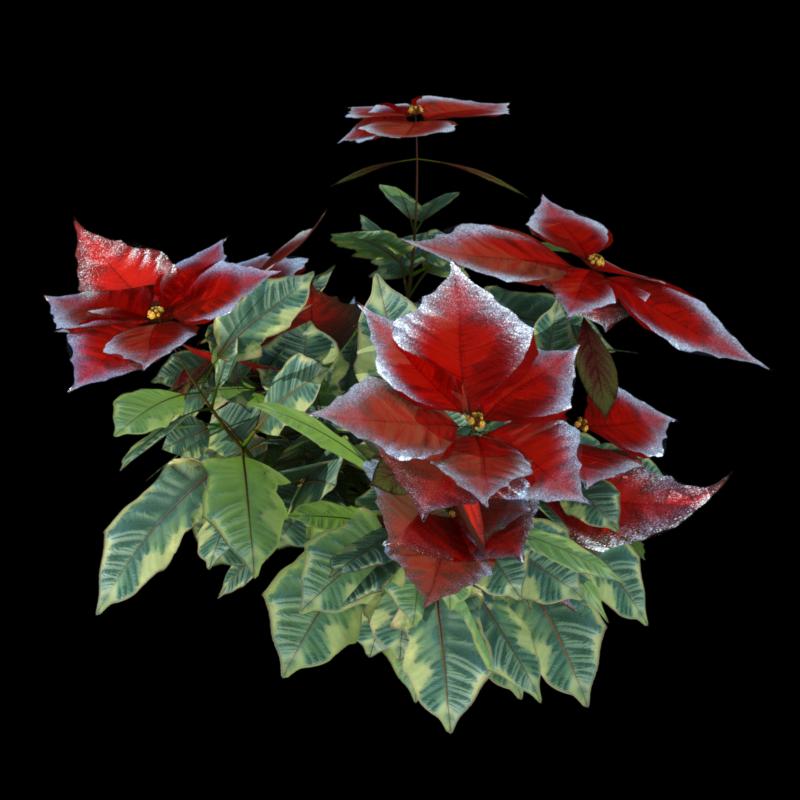 "Image de fleurs ""Poinsettia"" (render-tube)"