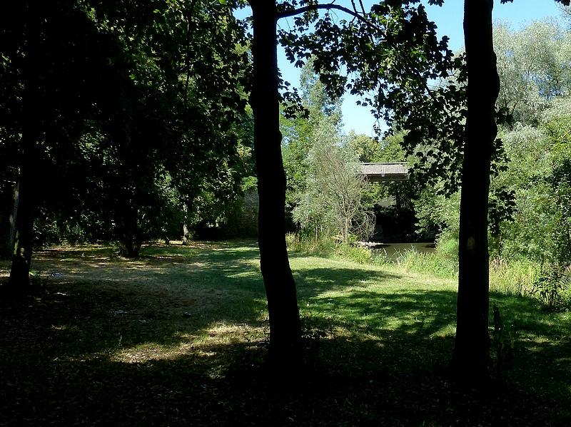 Metz / Suite à une promenade sous les arbres...