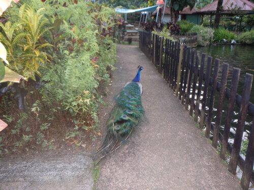 Réunion au jardin de Valombreuse à Petit Bourg