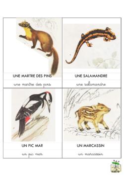 carte de nomenclature animaux en Champagne-Ardenne