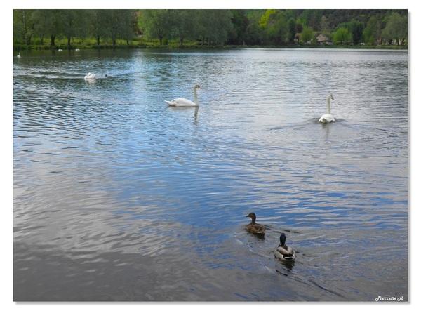 Sur un lac