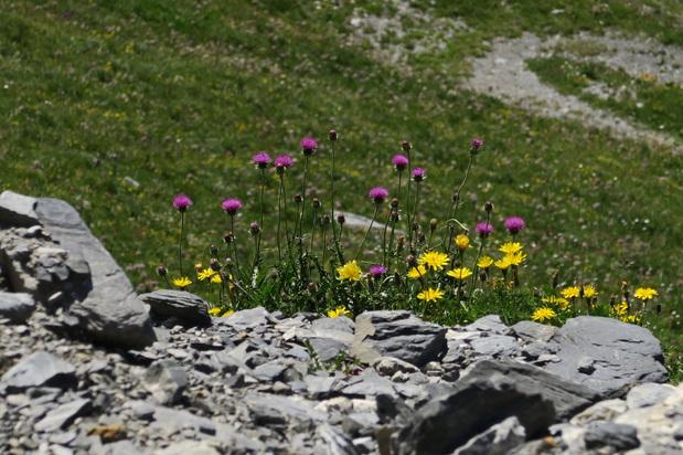 Au bord du chemin... bouquet au choix