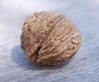 200px-Black Walnut Juglans nigra Nut 2400px