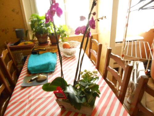 Quelques fleurs !