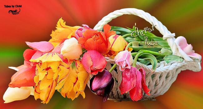 Panier de Tulipes .