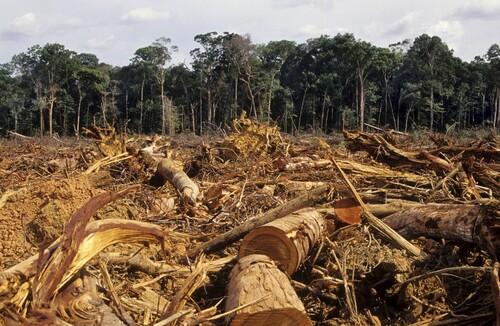 Déforestation... pour du nutella !! (1)