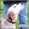 Bianca EB 3