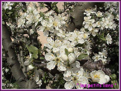 Fleurs pâques 2010 003 GF