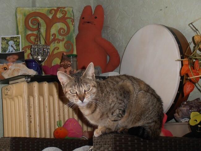 Trésors de montagne, chats et..... branlette Oo......