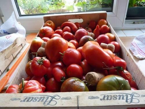 tomates etc...