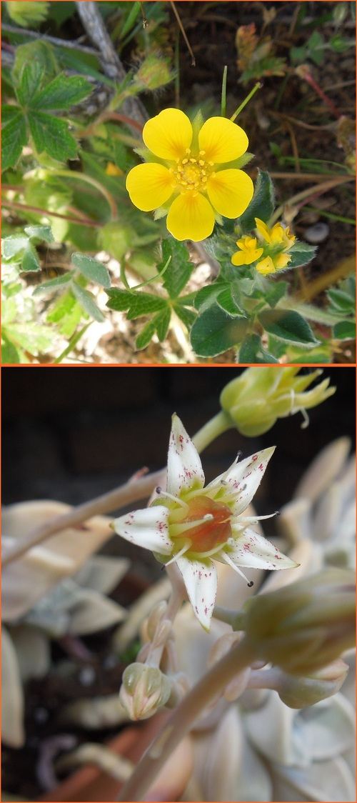Des fleurettes