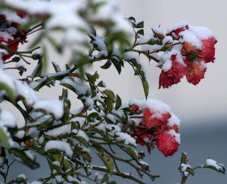 La_neige_075