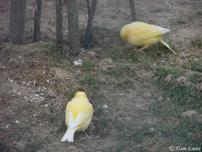 Oiseaux_exotiques_10Janv09_1