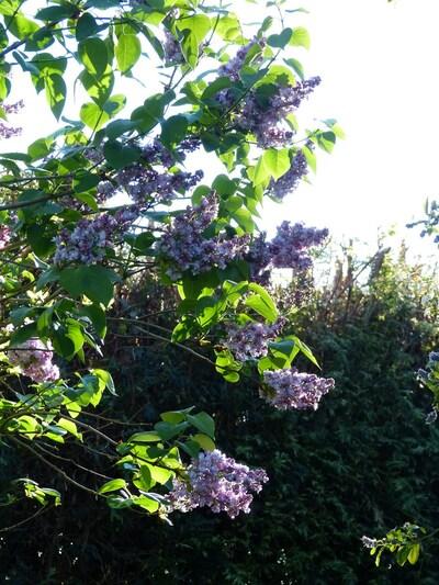 Le jardin 1er semaine de mai 2015