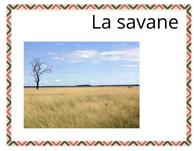 Lexique - thème savane