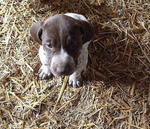 Fiona 1 mois