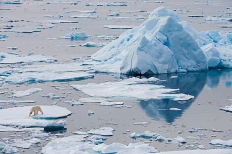 Un ours blanc se tient sur une plaque de glace, au large de l'archipel norvégien du ...