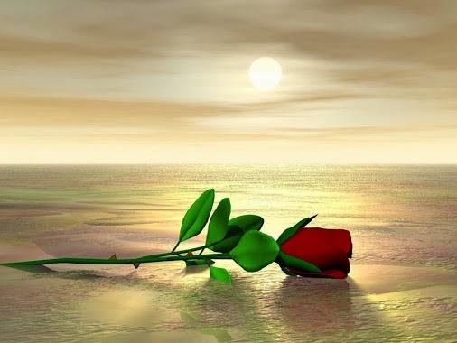 """Résultat de recherche d'images pour """"image de belle rose"""""""