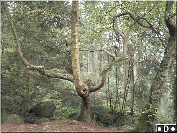 arbre-tordu.jpg