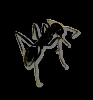 Tubes fourmis