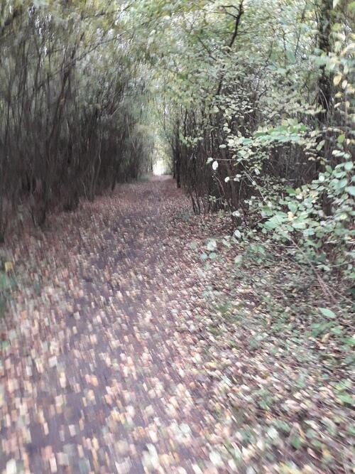 Balades en forêts