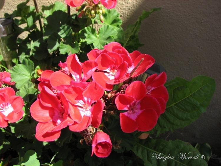 Ingersheim : Jardin extraordinaire