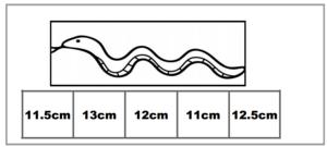 atelier de mesure de longueurs
