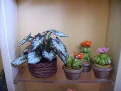 caladium et cactus