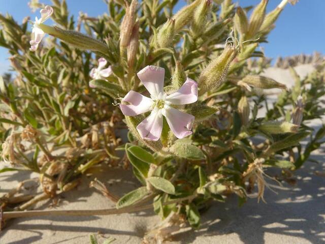 Petite fleur sur la plage