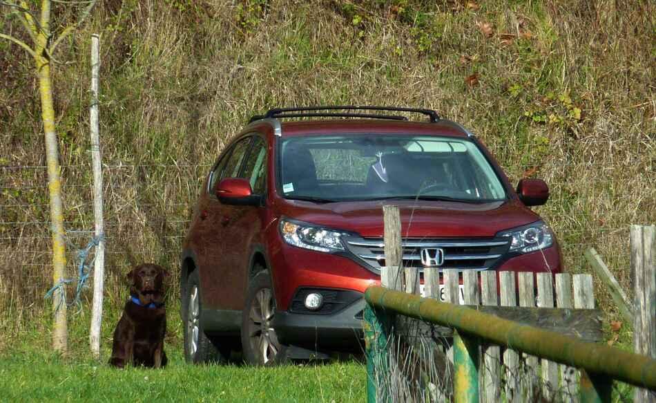 Cours au club canin 21 Novembre.