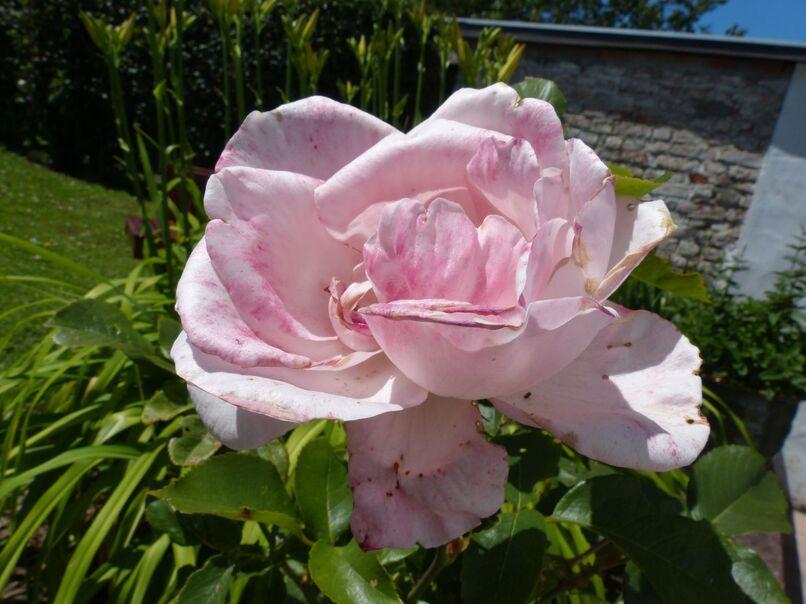 Les fleurs de mes voisines
