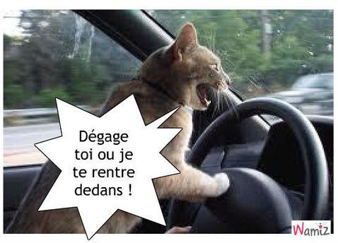 """Résultat de recherche d'images pour """"chat bon appétit humour"""""""