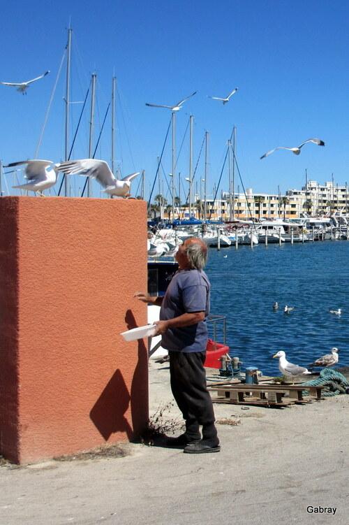 Les mouettes au port du Barcarès
